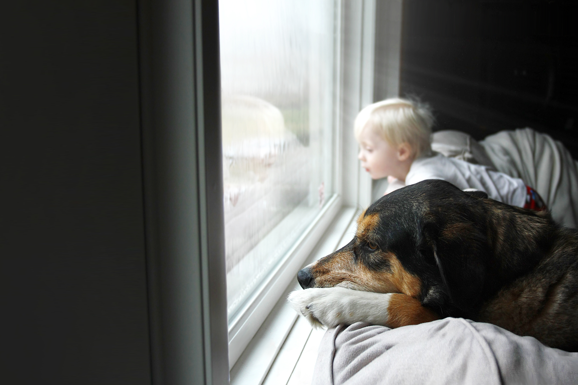 Boy and dog looking out at storm